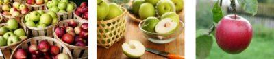 Яблоки дольки (кубик)